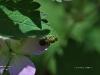 Enjoying geranium