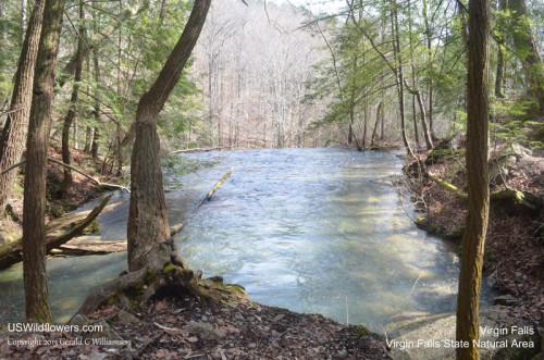 Virgin Falls Creek