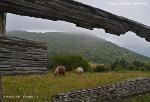 Grayson Highlands State Park Wild Ponies